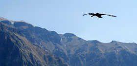 Photos of Colca canyon trekking