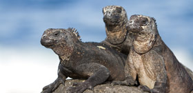 Adventure holiday in the Galapagos